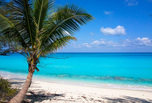 palm_bahamas_beach