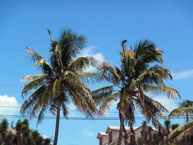 palm_trees_bahamas