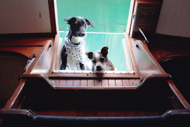 dogs_sailboat_companionway