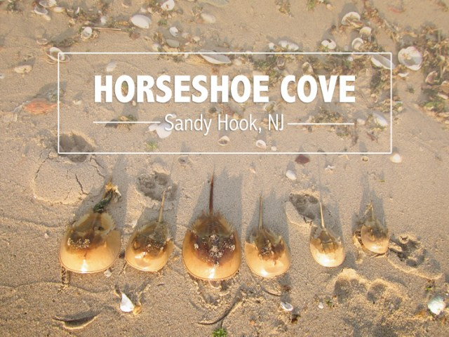 Horseshoe_Cove_NJ