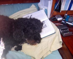 willow_reads