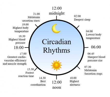 circadian_rhythms