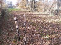 Une plantation de bâtons