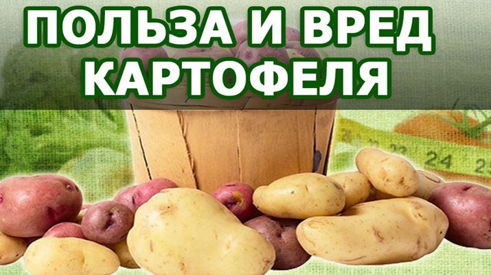 polza_kartofelia