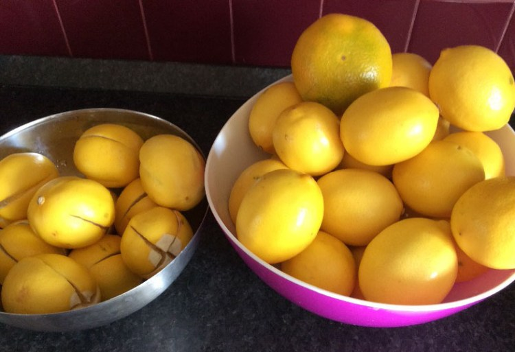 marinovannie-limoni2