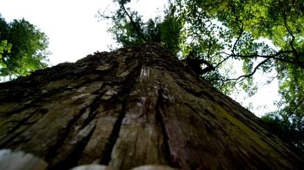 基本神社は杉が多いね