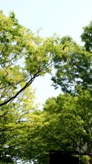 まさに緑の季節
