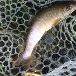 3時間限定の釣り|姫川水系 ルアーフィッシング