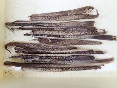 160528竹皮乾燥