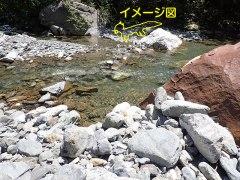 160809三峰川イタチ3