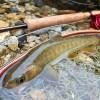 一番好きな川のイワナ|木曽川水系フライ&テンカラ