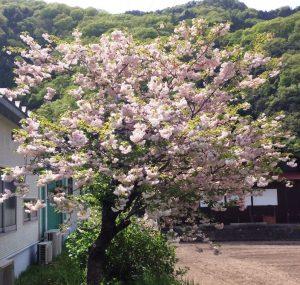 20160425YaeHiroshima