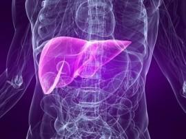 de locatie van de lever in het lichaam