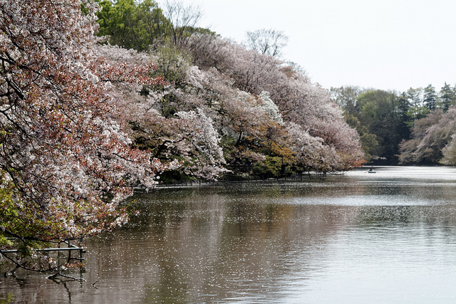 inokashira-park