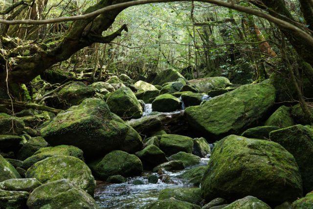 50927269 - the moss forest shirataniunsuikyo