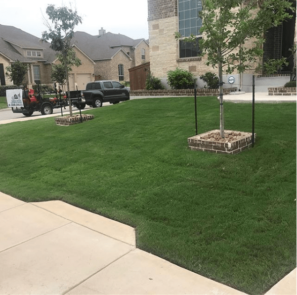 weed control and fertilizer program san antonio lawn mowing