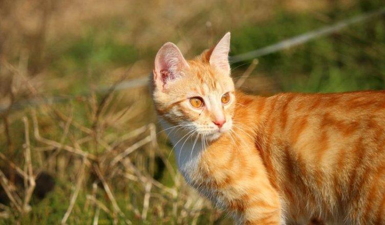 abbattimento cani e gatti inselvatichiti - puglia