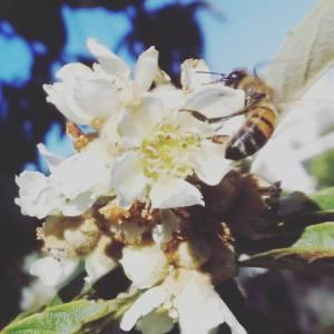 seguendo il volo dell'ape escursione parco paduli
