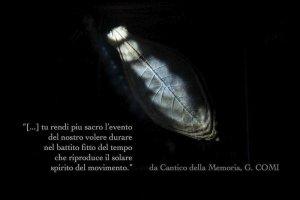 Girolamo Comi Lucugnano - immagine Angela Caputo Lezzi