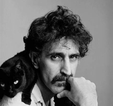 Frank Zappa Gatto