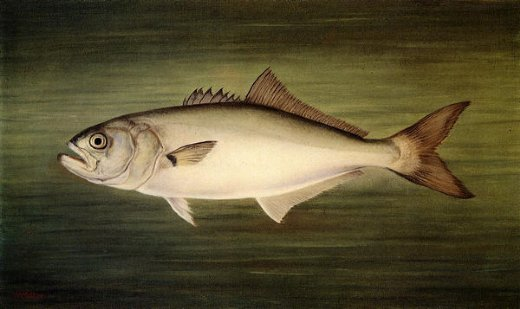 Image result for fish painting