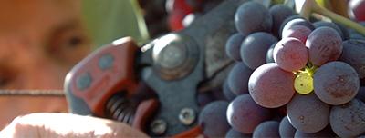 Made in Campania Tour Vino
