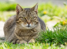 Cat protection charity comes to MediaCityUK