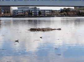 Removal of debris from MediaCity waters halted by council