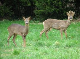 Evelyn Simak / Roe deer alert/ Wikimedia commons