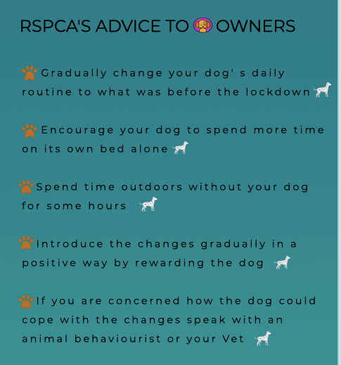 RSPCA'S ADVICE TO DOG OWNERS
