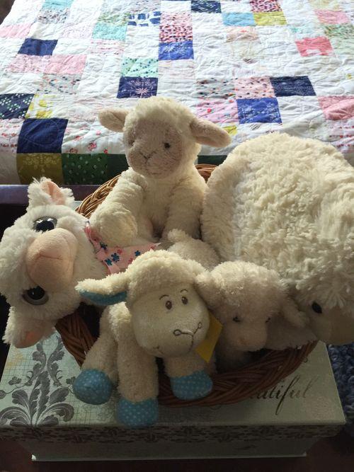 Sheepflock