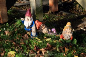 Meeting of the Gnomes