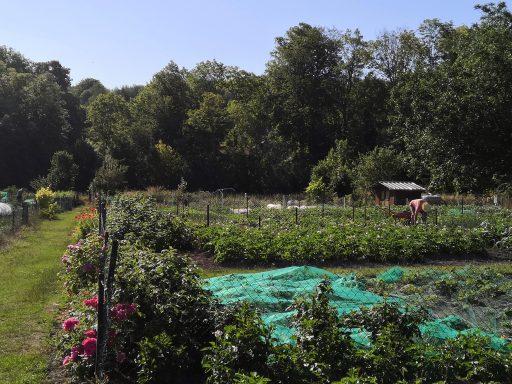 Jardins ouvriers de Salouël