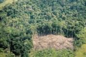 COVID-19: los retos en protección del medio ambiente (5-18-20)