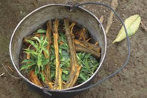 Experiencing Covid-19 in the Ecuadorian Amazon rainforest (4-1-21)