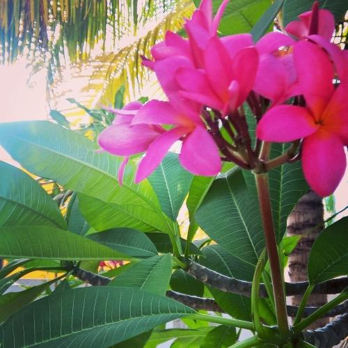 Casa de los Viajeros flowers