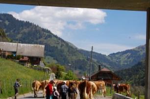 Swiss Traffic Jam