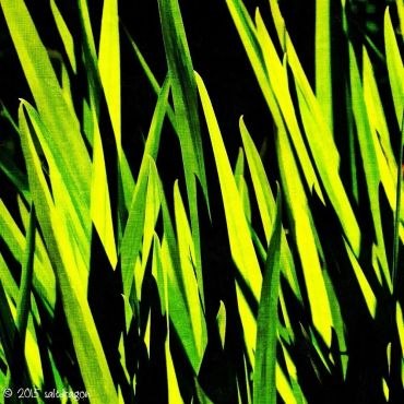 Graphic green leaves