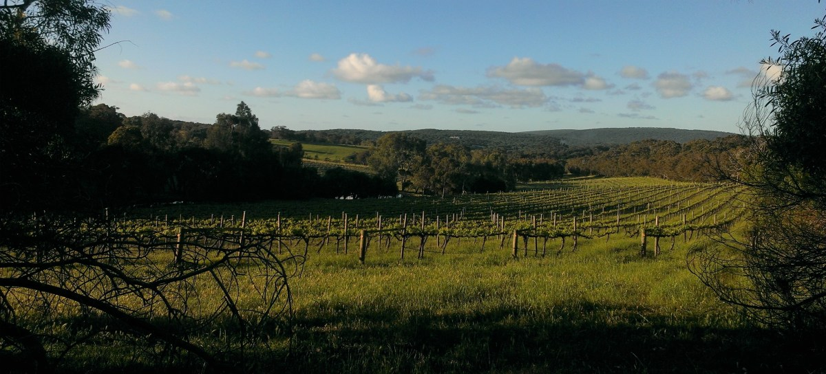 Margaret River Roadtrip: wine, wildflowers and woodsmoke (also beer)