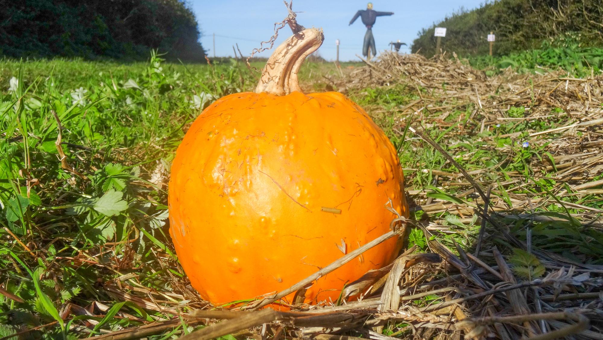 pumpkin recipes from cornwall