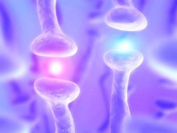 Dieta para el Sistema Nervioso y bajar el Nivel de Estrés