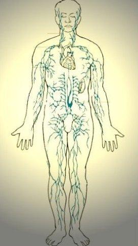 sistema linfático y beneficios del masaje linfático