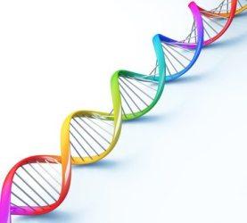 Síndrome del cromosoma Frágil X (Sïndrome de Martín Bell)