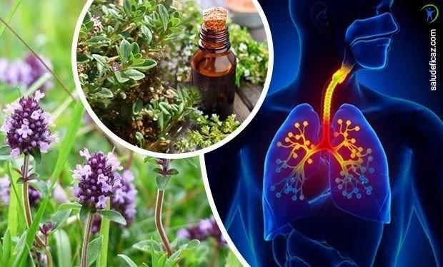 Propiedades medicinales del tomillo para la salud