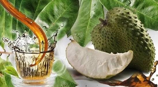 cómo hacer te de hojas de guanábana y cuáles son sus beneficios