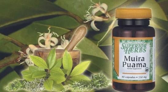 Muira Puama Propiedades afrodisiacas y beneficios para la salud