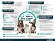 Boehringer Ingelheim dona vacunas para ayudar a erradicar la rabia en Puerto Rico