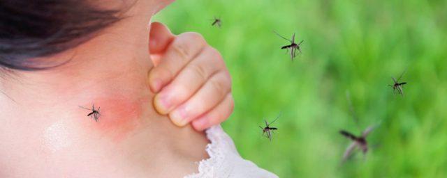 Pediatría llama a retomar jornadas de limpieza y concientización para prevenir el dengue y la malaria