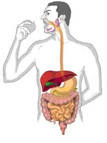 7 Consejos Para Mejorar la Digestión