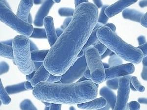Beneficios Para la Salud de los Probióticos